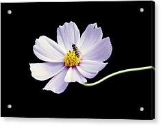 bee and Wildflower Acrylic Print