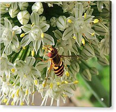 Bee Beautiful Acrylic Print