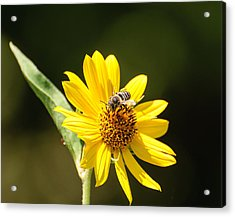 Acrylic Print featuring the photograph Bee Flower by John Johnson