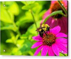 Bee Happy Acrylic Print