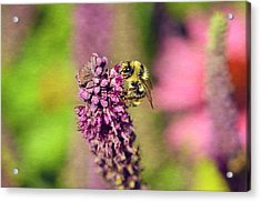 Bee Happy Acrylic Print by Maria Angelica Maira