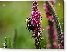 Bee Heaven Acrylic Print