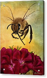 Bee I Acrylic Print by April Moen