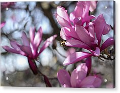 Acrylic Print featuring the photograph Bee In Flight by Amber Kresge