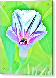 Bee In Pastel Acrylic Print