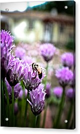 Bee In The Chives Acrylic Print by Joel Loftus
