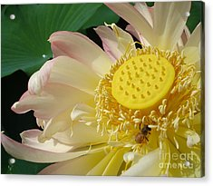 Acrylic Print featuring the photograph Bee by Jane Ford