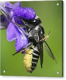 Bee-licious Flower Acrylic Print by Myrna Bradshaw