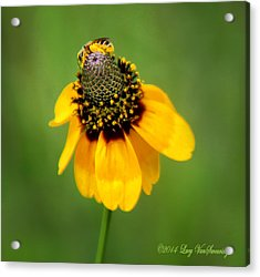 Bee My Coneflower Acrylic Print