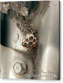 Bee Acrylic Print by Olivia Narius