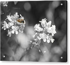 Bee On Black And White Flowers Acrylic Print