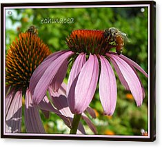 Acrylic Print featuring the photograph Bee On Echinacea by Heidi Manly