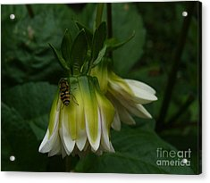 Acrylic Print featuring the photograph Bee On Flower by Jane Ford