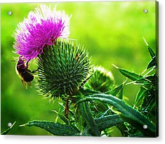 Bee On Thistle Acrylic Print