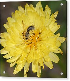 Acrylic Print featuring the photograph Bee On Yellow Flower by Susan D Moody