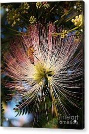 Bee Patient Acrylic Print