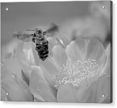 Acrylic Print featuring the photograph Bee Rising by Len Romanick