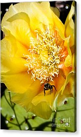 Bee Stands Guard Acrylic Print