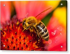Bee Time Acrylic Print