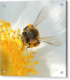 Acrylic Print featuring the photograph Bee-u-tiful Squared by TK Goforth
