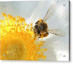 Acrylic Print featuring the photograph Bee-u-tiful by TK Goforth