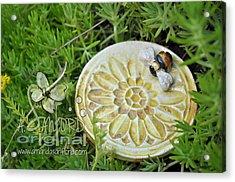 Bee-ware Acrylic Print by Amanda  Sanford
