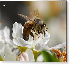 Acrylic Print featuring the photograph Bee4honey by Patrick Witz