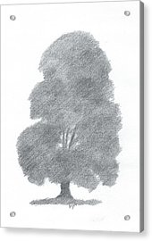 Beech Tree Drawing Number Four Acrylic Print by Alan Daysh