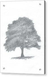 Beech Tree Drawing Number Three Acrylic Print by Alan Daysh