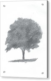 Beech Tree Drawing Number Two Acrylic Print by Alan Daysh