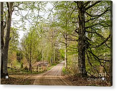 Acrylic Print featuring the photograph Beeches At Springtime by Kennerth and Birgitta Kullman