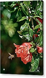 Beeing There Acrylic Print