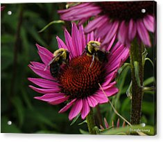 Acrylic Print featuring the photograph Beelievers by Lingfai Leung