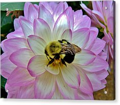 Bee's Delight Acrylic Print