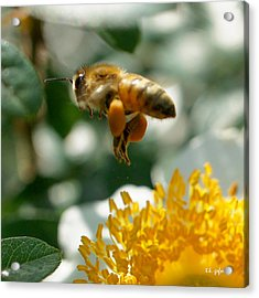 Acrylic Print featuring the photograph Bee's Feet Squared by TK Goforth