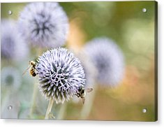 Acrylic Print featuring the photograph Bees In The Garden by Peggy Collins