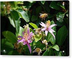 Bee's Larger Acrylic Print by Kelli Donovan