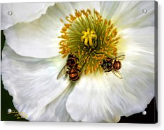 Acrylic Print featuring the painting Bees On A Flower by Sharon Beth