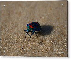 Beetle Beligerance  Acrylic Print by Sarah Sutherland