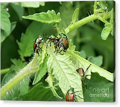 Acrylic Print featuring the photograph Beetle Posse by Thomas Woolworth