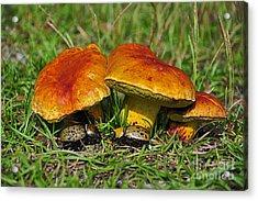 Beetles Beneath Boletus Acrylic Print
