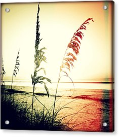 Before Day II Sunset Acrylic Print by Chris Andruskiewicz
