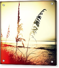 Before Day Sunset Acrylic Print by Chris Andruskiewicz