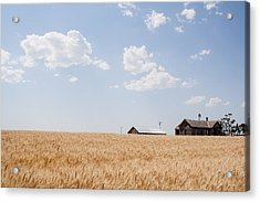 Before The Harvest Acrylic Print