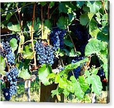 Before The Harvest Acrylic Print by Kay Gilley