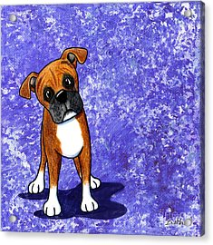 Befuddled Boxer Acrylic Print by Kim Niles