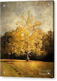 Beginning Of Autumn Acrylic Print by Jai Johnson