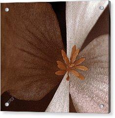 Begonia Acrylic Print by Ben and Raisa Gertsberg