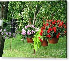 Begonias On Line Acrylic Print
