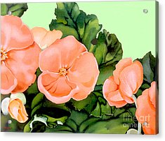 Begonias Acrylic Print by Patricia Howitt